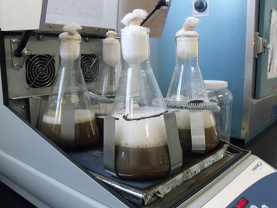 bioinsecticidas